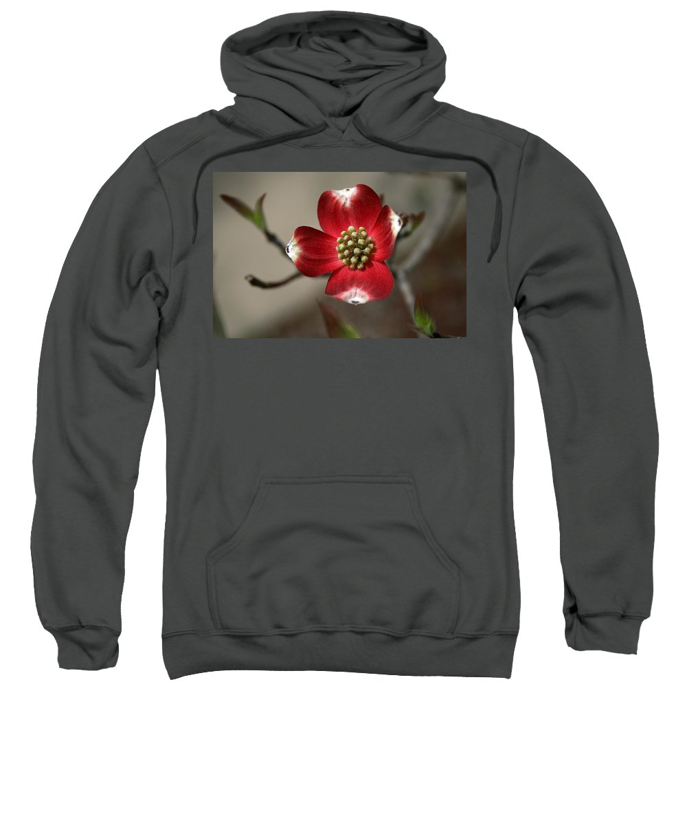 Flower Sweatshirt featuring the photograph Red Dogwood by Andrei Shliakhau