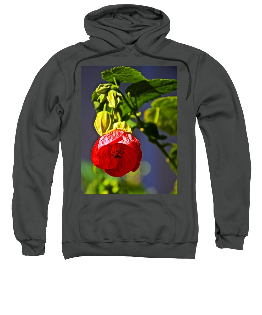 Scarlet Mallow At Pilgrim Place In Claremont Sweatshirt featuring the photograph Scarlet Mallow At Pilgrim Place In Claremont-california- by Ruth Hager