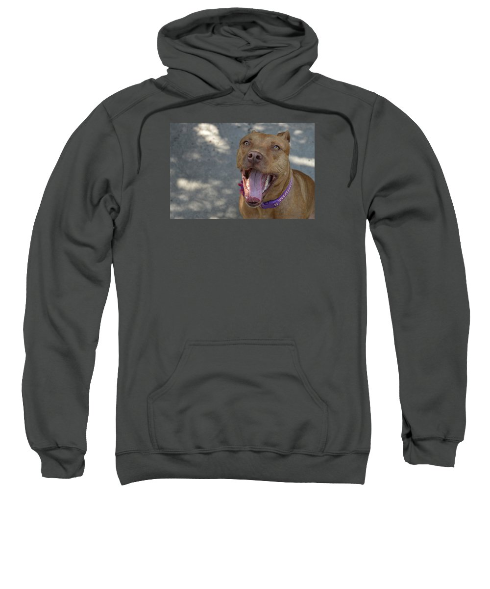Rednose Sweatshirt featuring the photograph Red Nose Pitty by Nadia