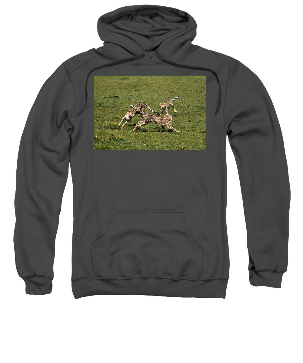 Africa Sweatshirt featuring the photograph Ring Around The Cheetahs by Michele Burgess