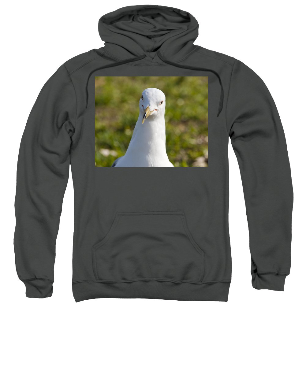 Larus Sweatshirt featuring the photograph Ring-billed Gull by Allan Hughes
