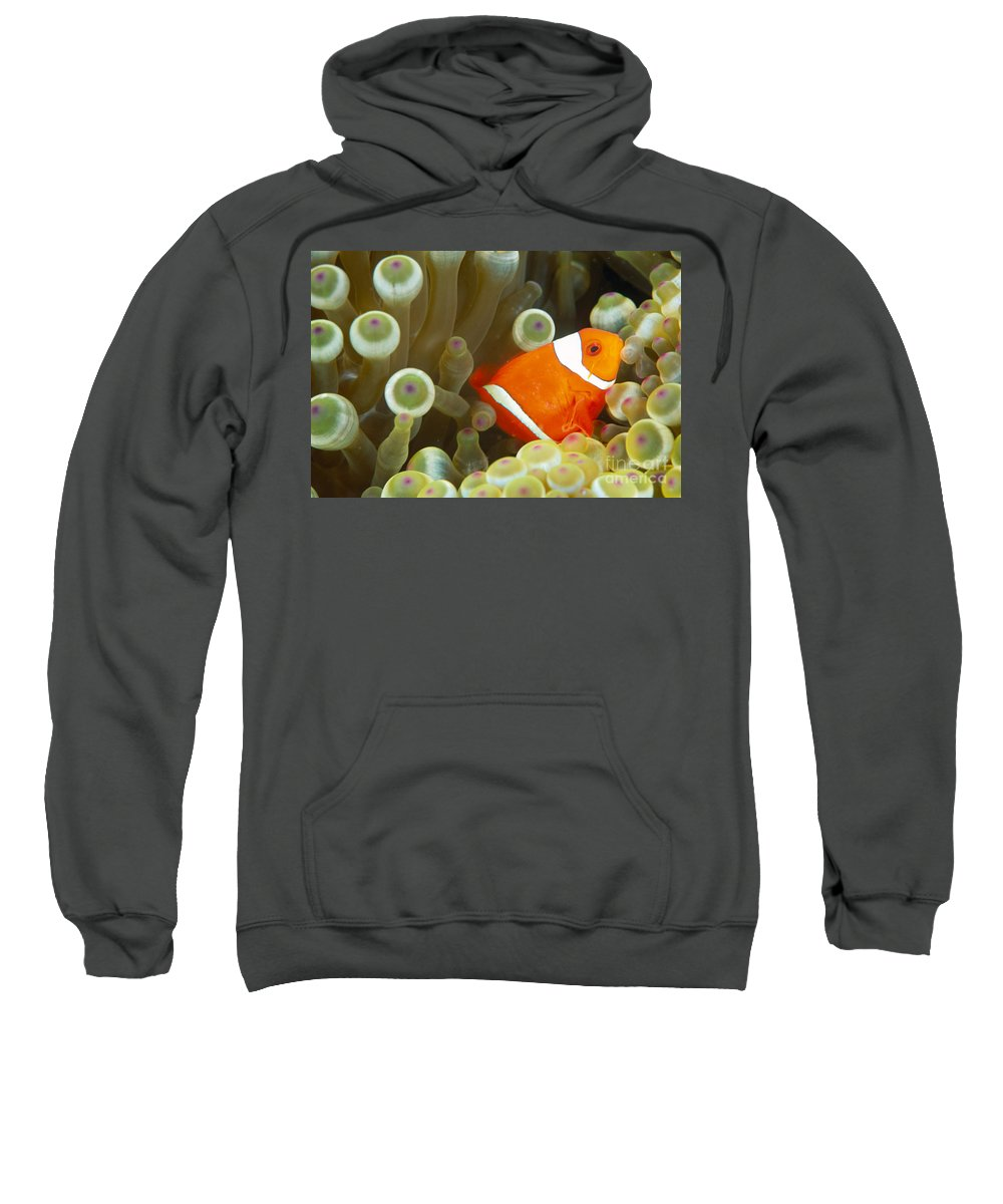 Anemone Sweatshirt featuring the photograph Spinecheek Clownfish by Dave Fleetham - Printscapes