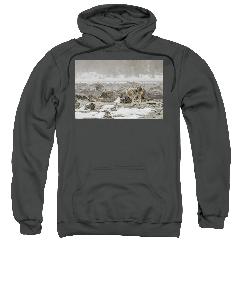 Coyote Sweatshirt featuring the photograph The Traveler by Yeates Photography