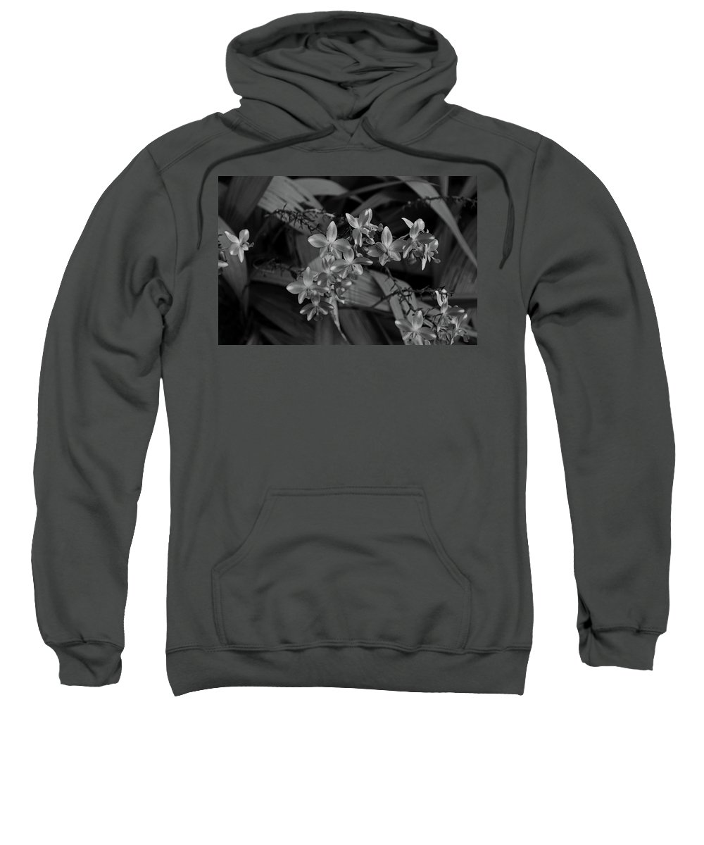 Orchid Sweatshirt featuring the photograph The Wild Side Of Wednesday by Michiale Schneider