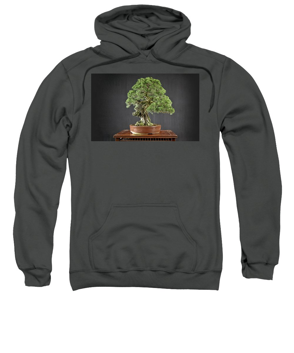 Tree Sweatshirt featuring the digital art Tree by Bert Mailer