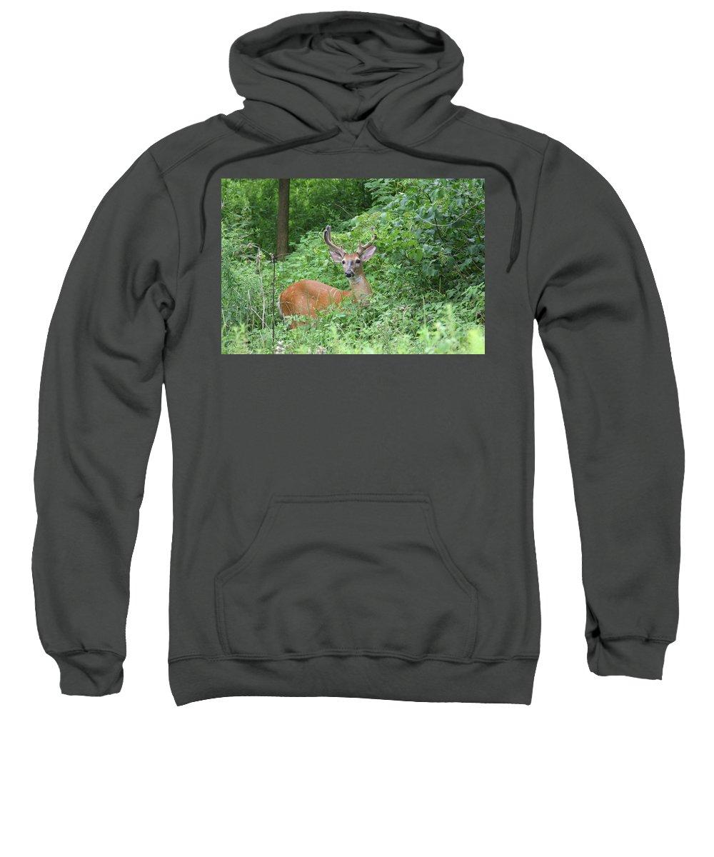 Whitetail Sweatshirt featuring the photograph Velvet Buck by Brook Burling