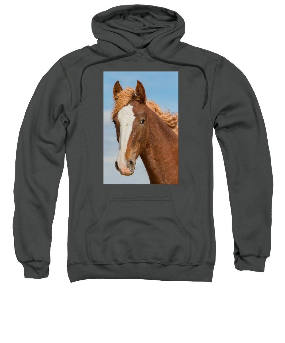 Wild Horse Sweatshirt featuring the photograph Wild Foal by Kent Keller