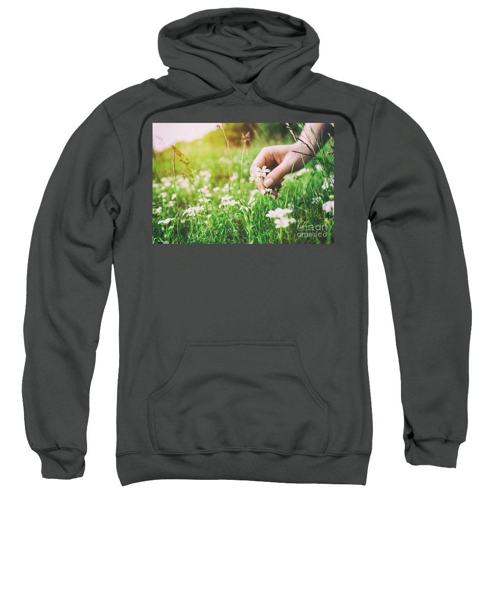 Flower Sweatshirt featuring the photograph Woman Picking Up Flowers On A Meadow, Hand Close-up. Vintage Light by Michal Bednarek