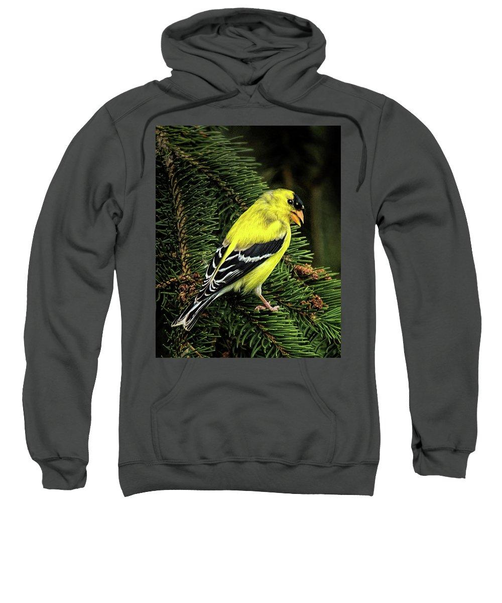 Yellow Finch Sweatshirt featuring the photograph Yellow Finch by Joe Granita