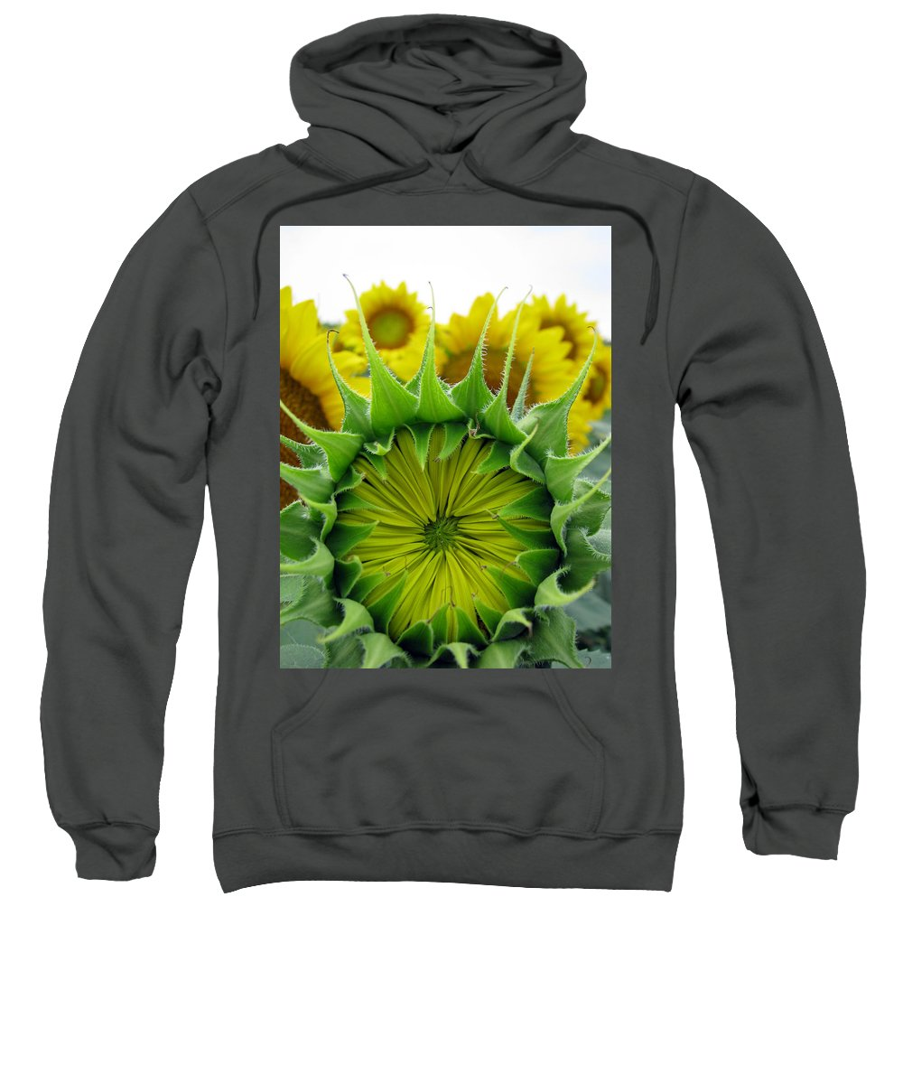 Sunflwoers Sweatshirt featuring the photograph Sunflower Series by Amanda Barcon