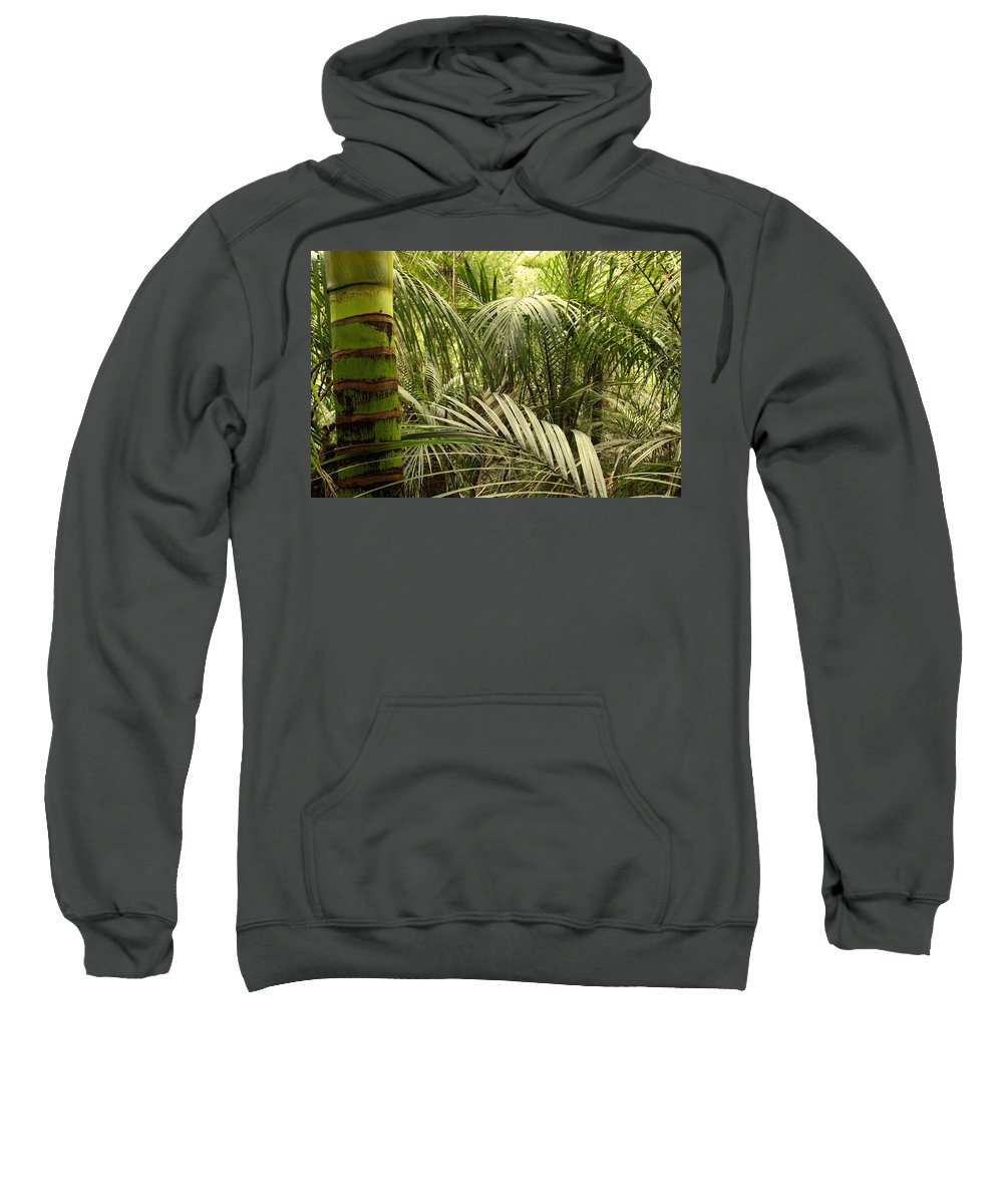 Rain Forest Sweatshirt featuring the photograph Jungle 64 by Les Cunliffe