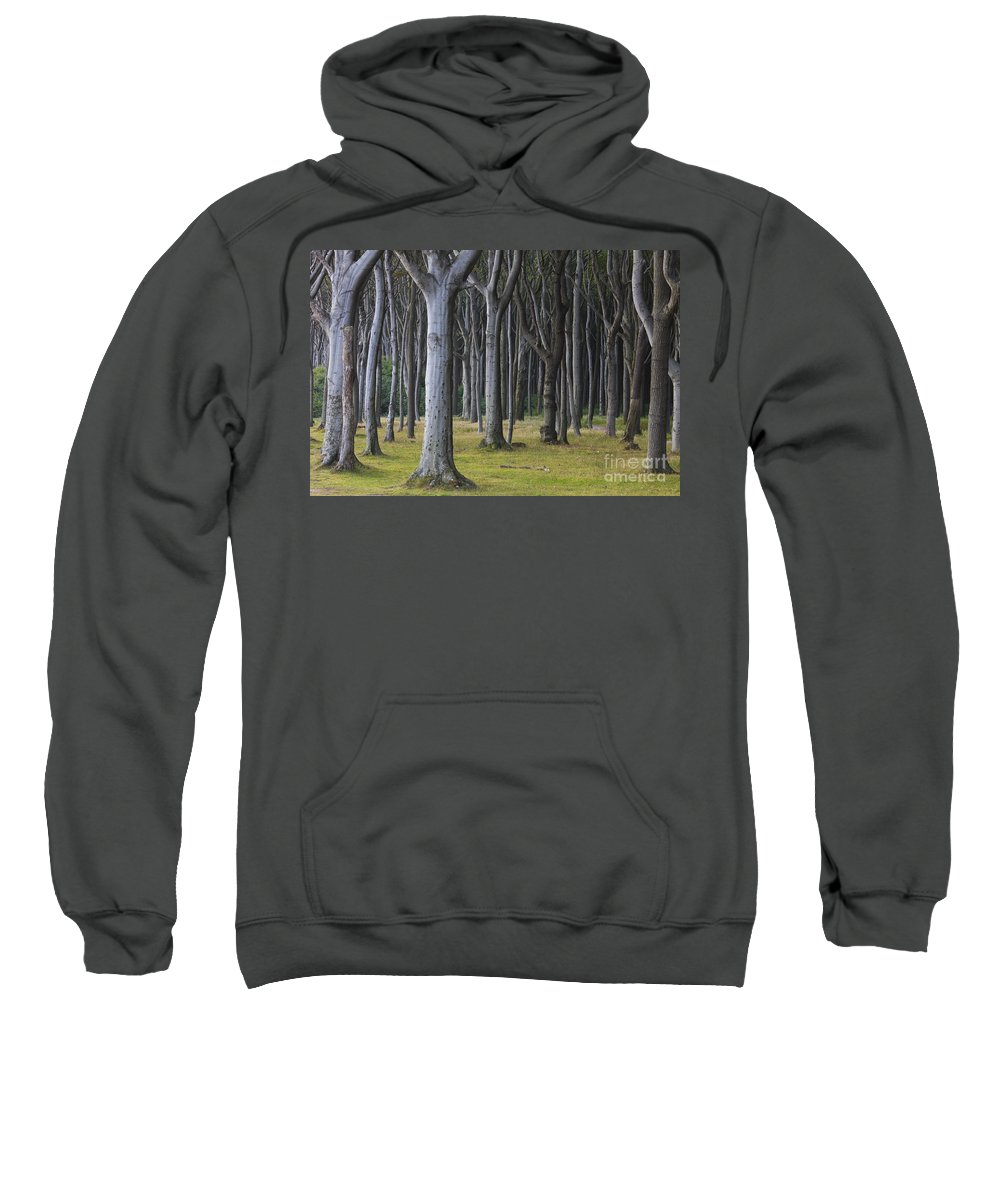Nienhagen Sweatshirt featuring the photograph 150403p254 by Arterra Picture Library