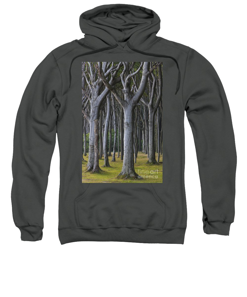 Nienhagen Sweatshirt featuring the photograph 150403p255 by Arterra Picture Library