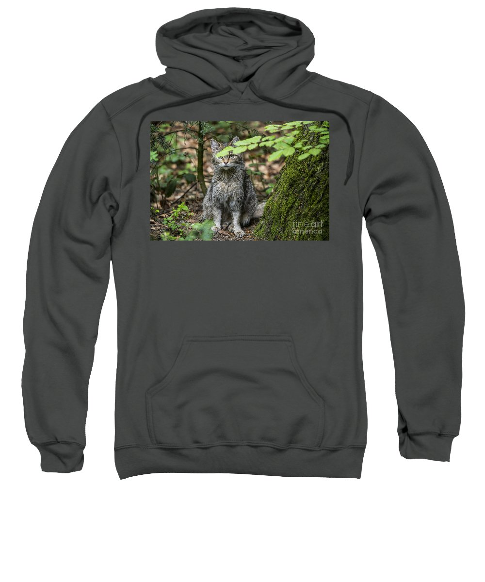 European Wildcat Sweatshirt featuring the photograph 150501p138 by Arterra Picture Library