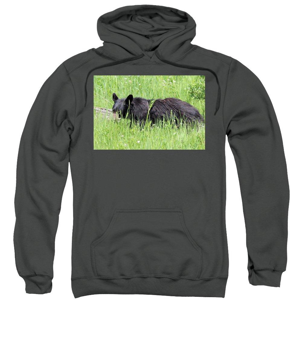 American Black Bear Sweatshirt featuring the photograph American Black Bear Yellowstone Usa by Bob Savage