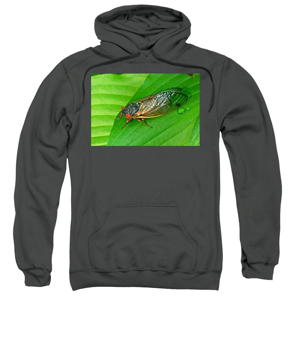 17 Sweatshirt featuring the photograph 17 Year Periodical Cicada by Douglas Barnett