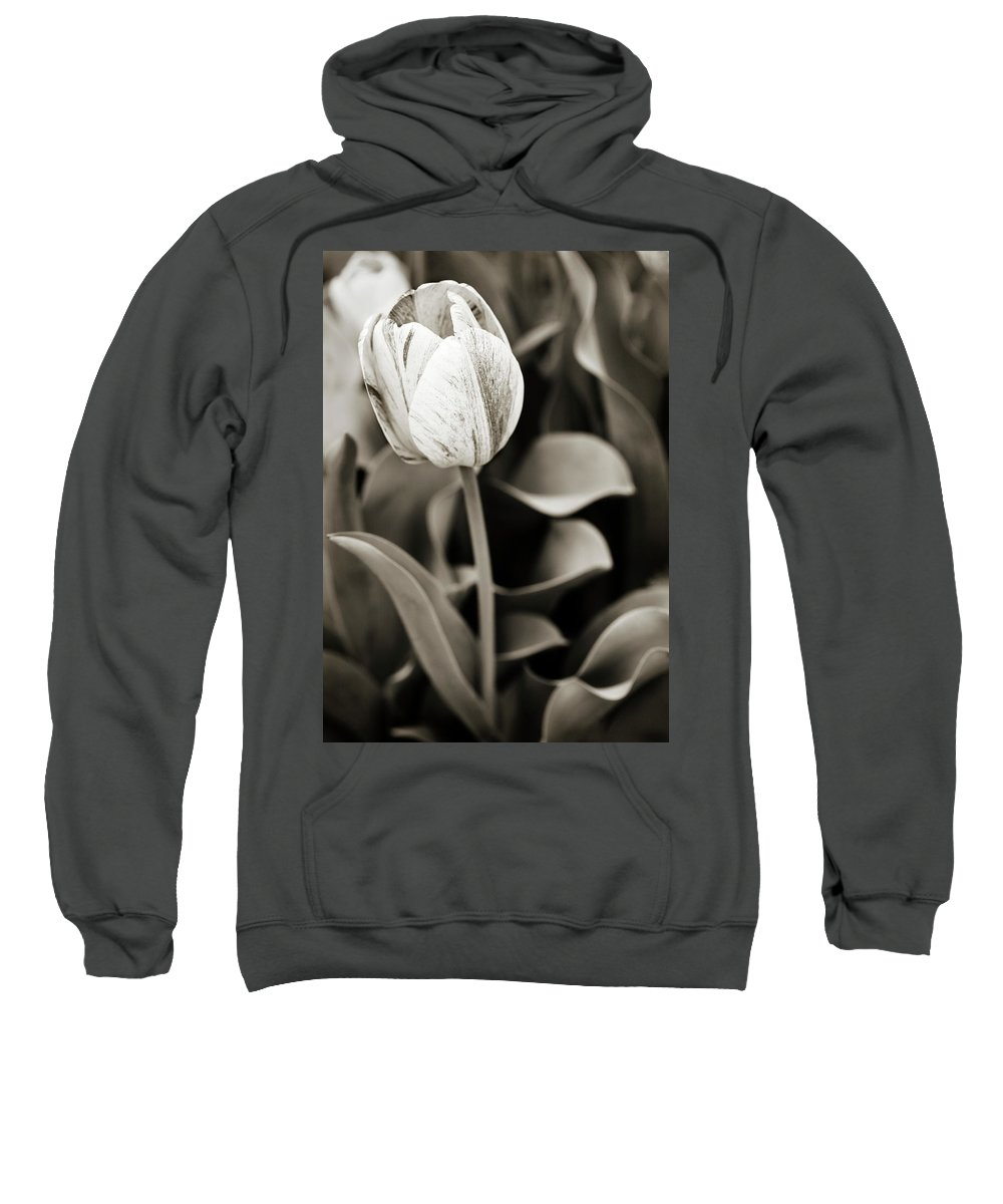 Tulip Sweatshirt featuring the photograph Black And White Tulip by Marilyn Hunt