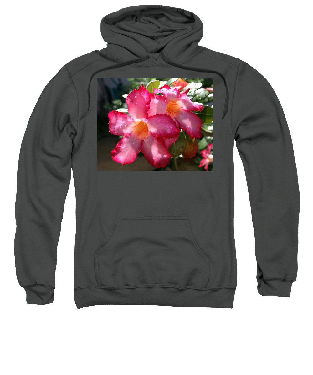 Desert Rose; Desert; Rose; Red; Pink; Flower; Bush; Garden; Florida; Plant; Adenium; Obesum; Africa; Sweatshirt featuring the photograph Desert Rose by Allan Hughes