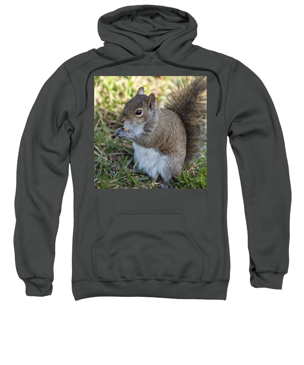 Squirrel Sweatshirt featuring the photograph Eastern Gray Squirrel by Allan Hughes