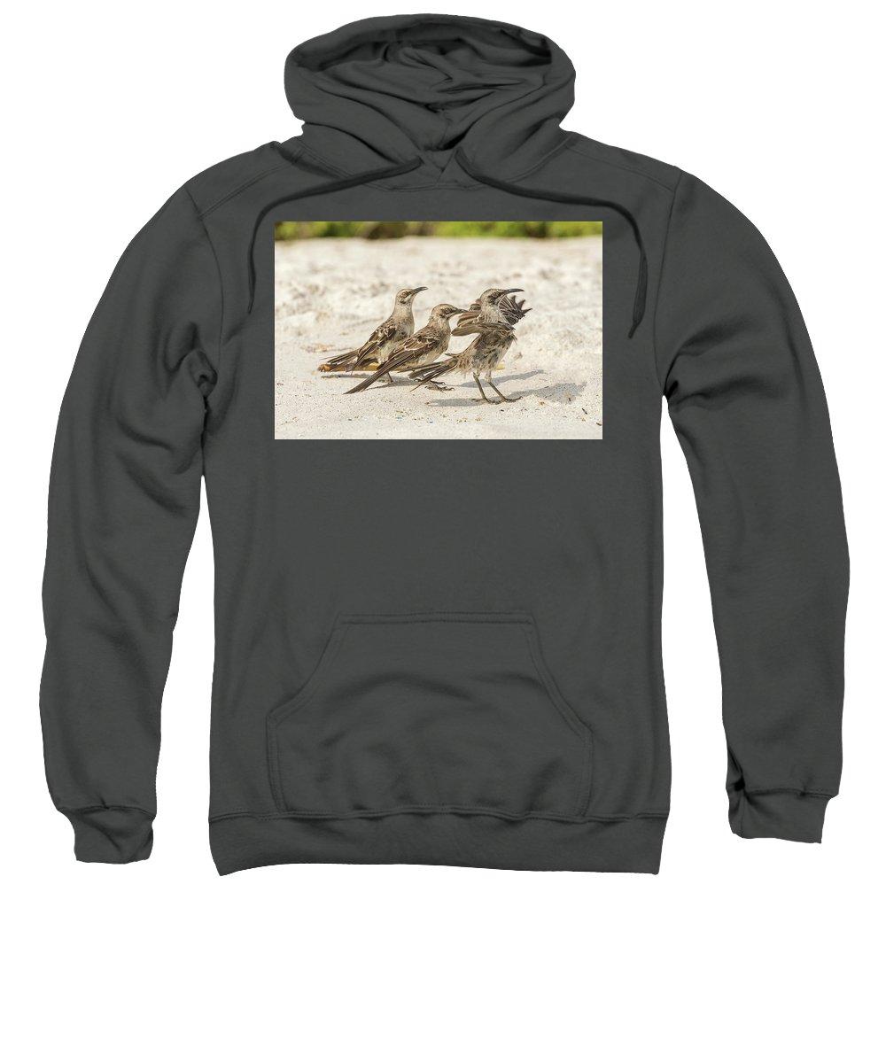 Espanola Sweatshirt featuring the photograph Galapagos Hood Mockingbird by Marek Poplawski