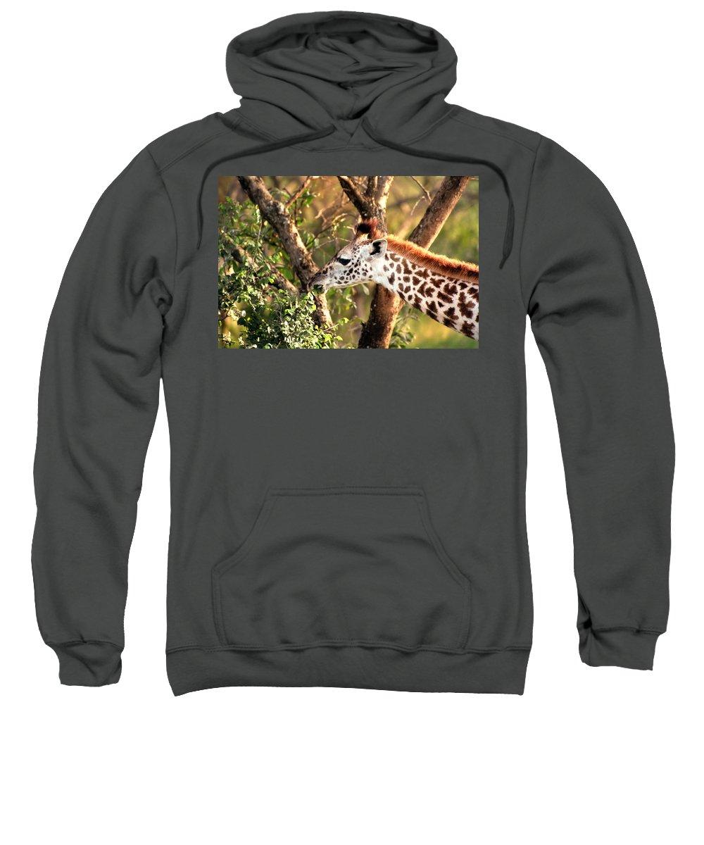 Giraffe Sweatshirt featuring the photograph Giraffe by Sebastian Musial