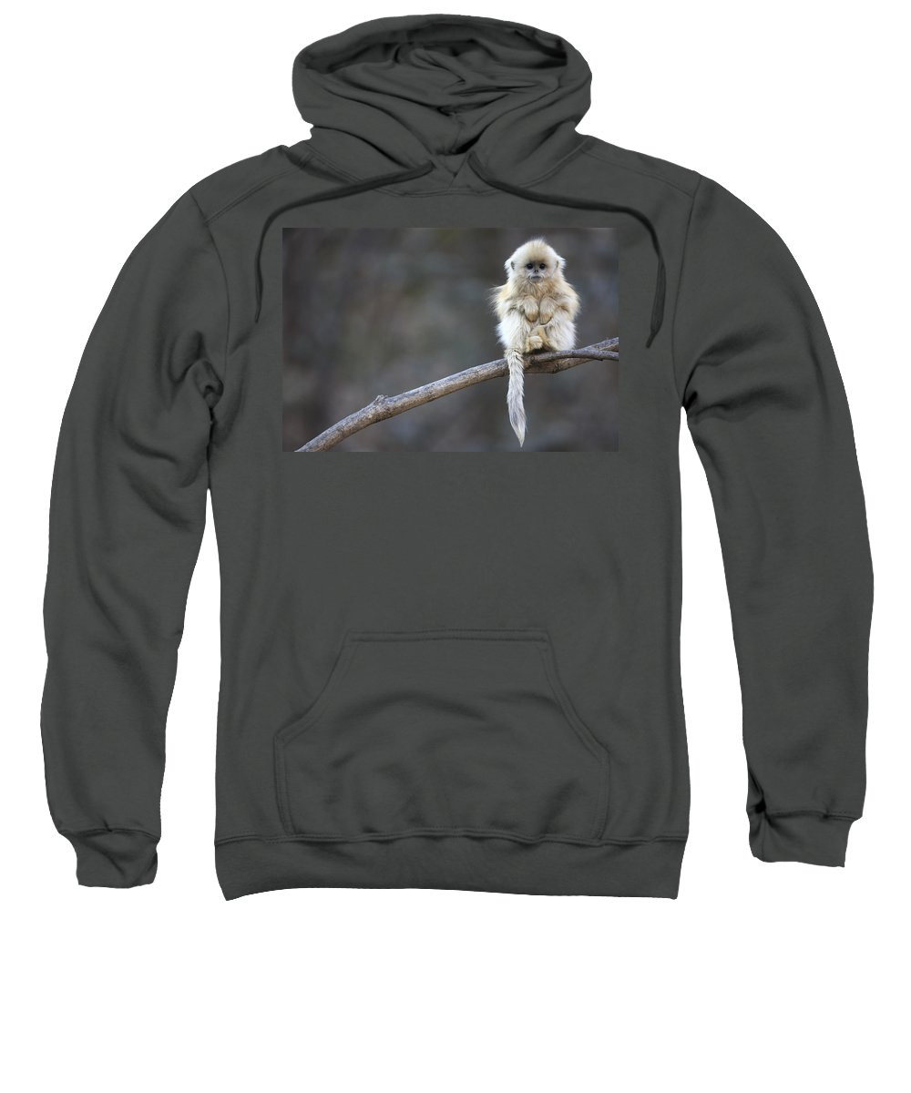 Mp Sweatshirt featuring the photograph Golden Snub-nosed Monkey by Cyril Ruoso