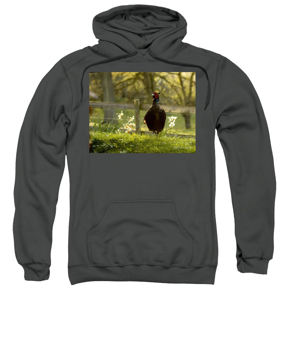 Pheasant Sweatshirt featuring the photograph In My Magic Garden by Angel Ciesniarska