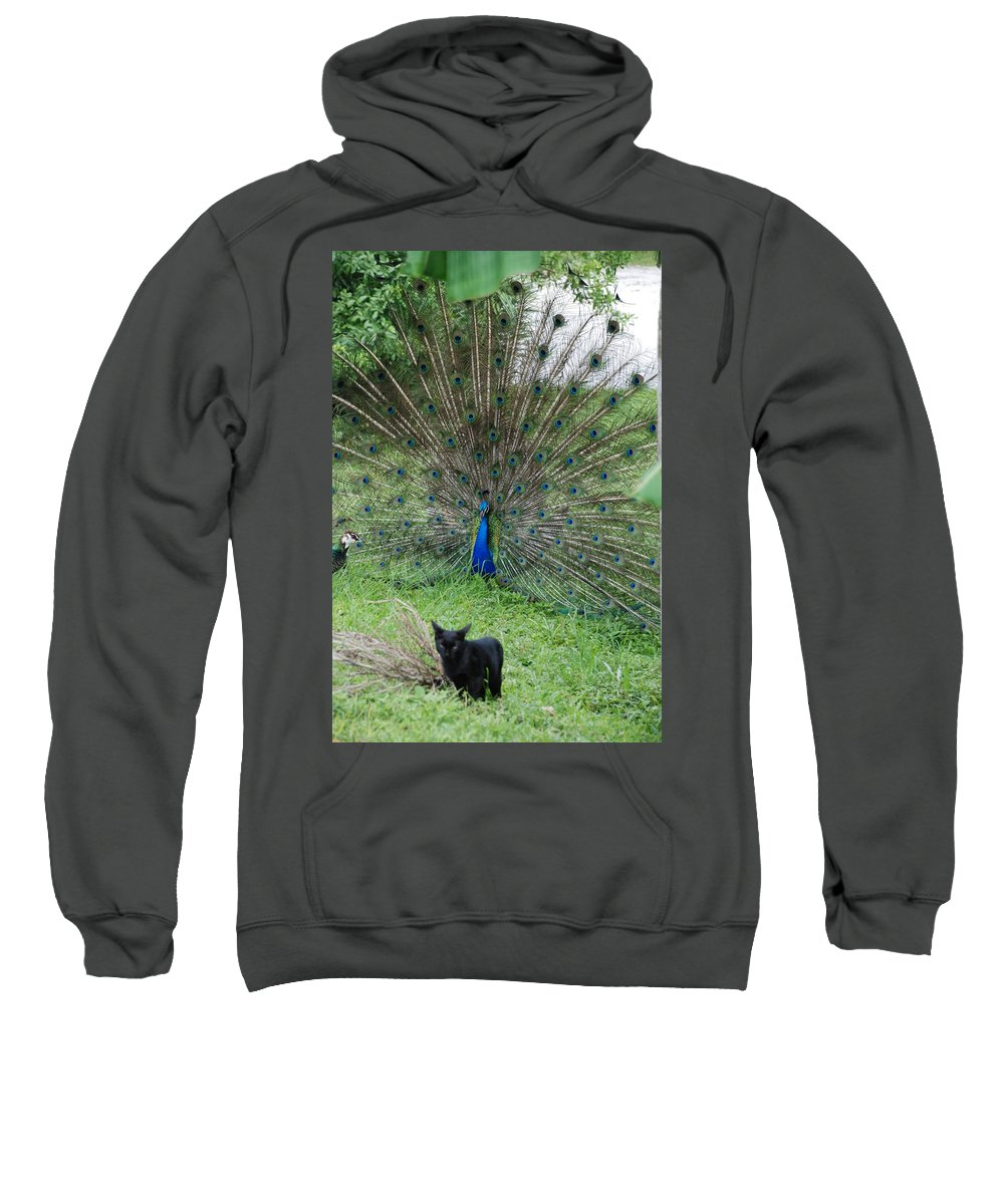 Animals Sweatshirt featuring the photograph 2 Peacocks And A Black Pussy Cat by Rob Hans