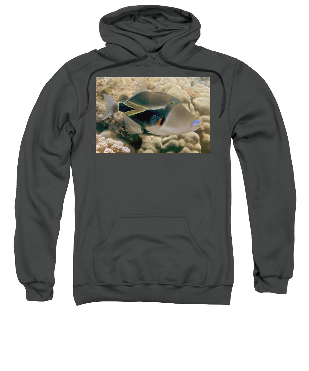Attack Sweatshirt featuring the photograph Picasso Triggerfish by Dave Fleetham - Printscapes