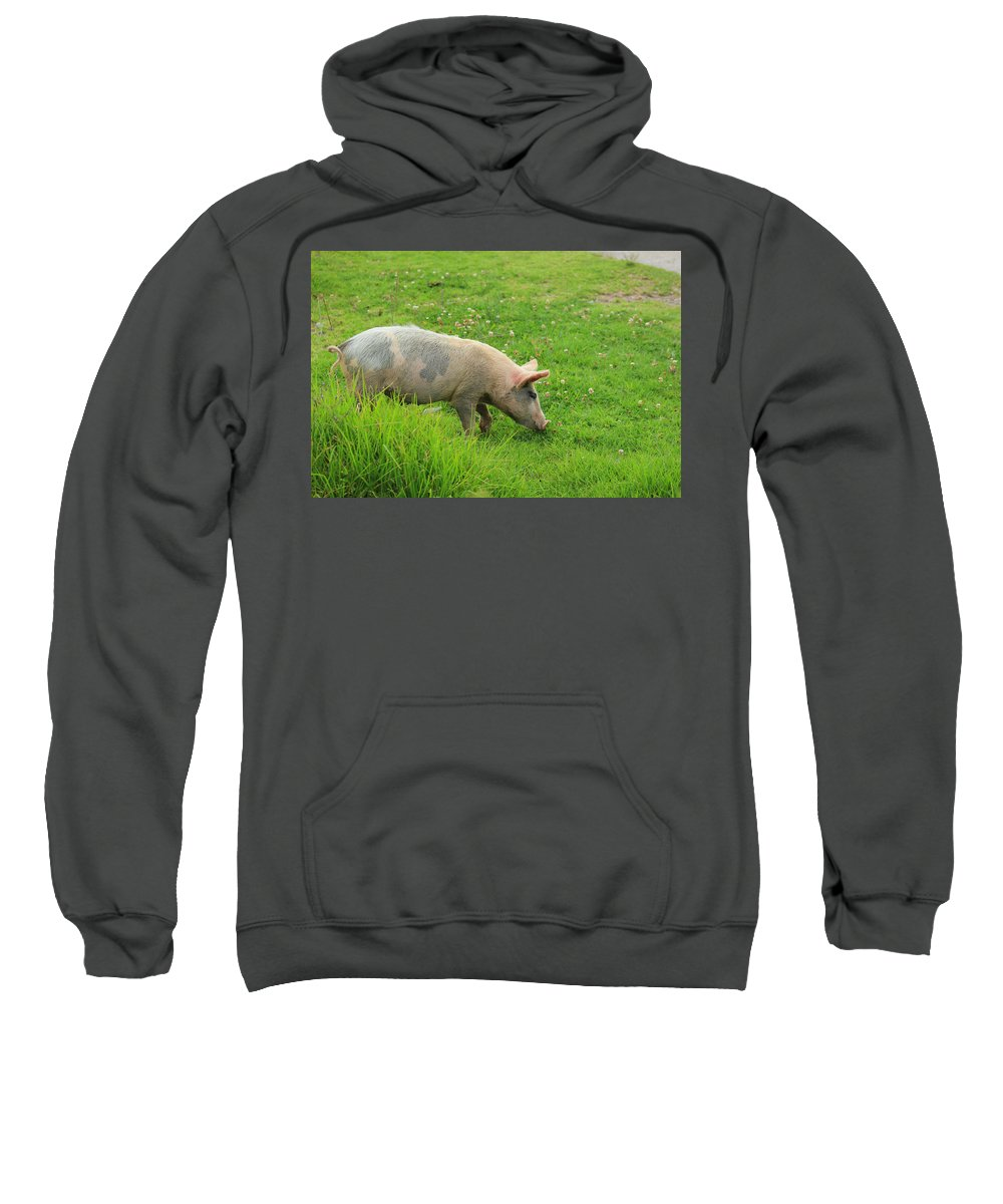Pig Sweatshirt featuring the photograph Pig In A Pasture by Robert Hamm