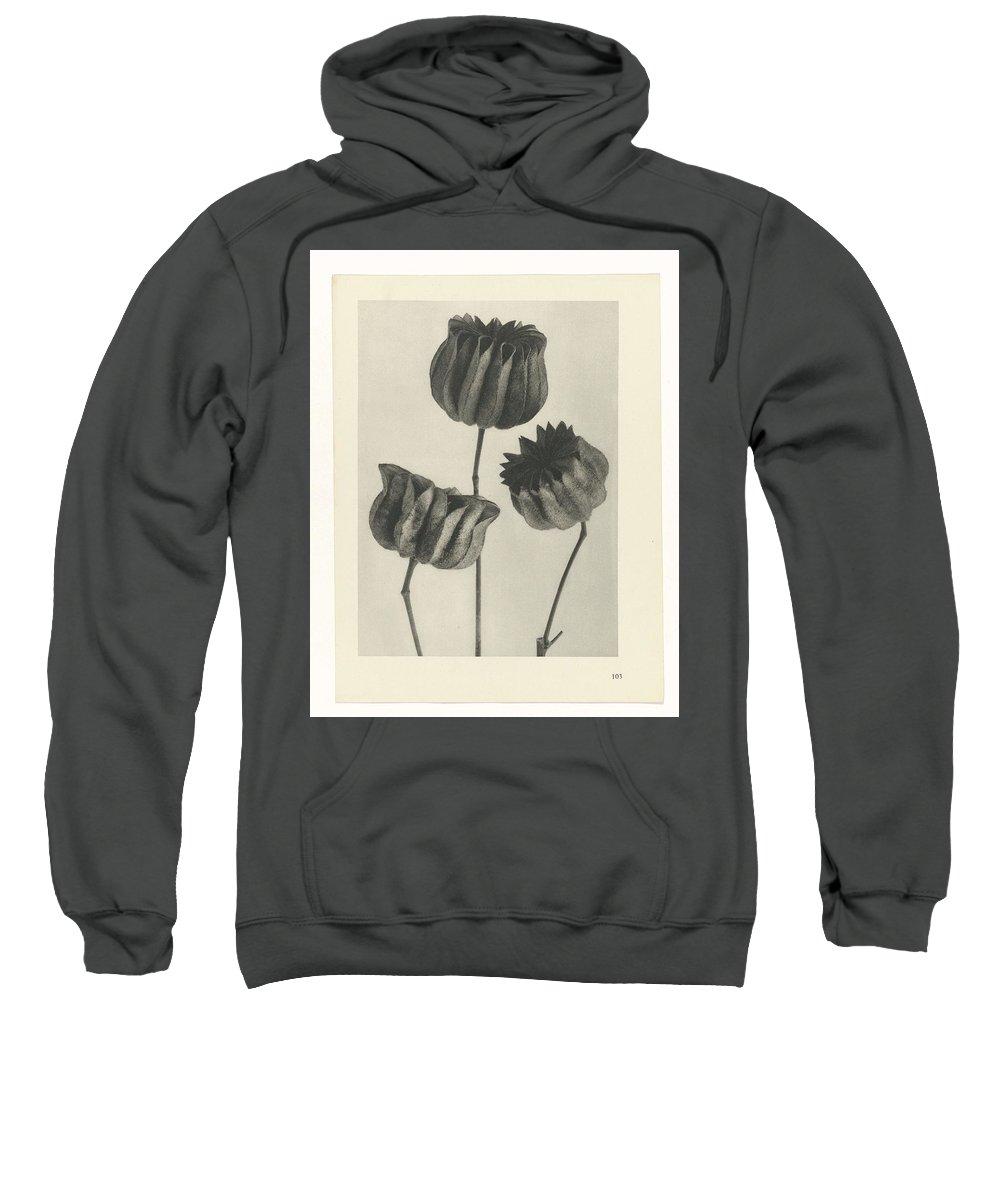 Flower Sweatshirt featuring the painting Plant Studies, 1928, Nature Series, By Karl Blossfeldt by Karl Blossfeldt