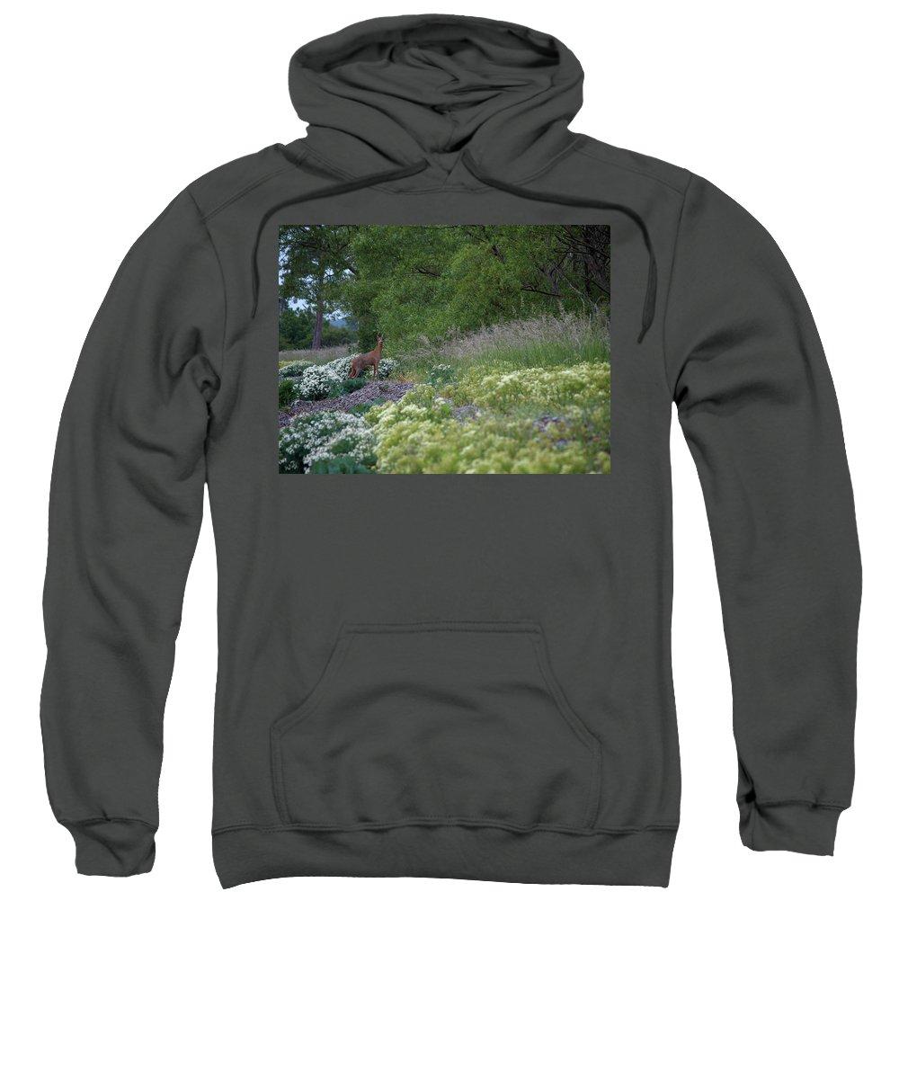 Lehtokukka Sweatshirt featuring the photograph Roe Deer by Jouko Lehto
