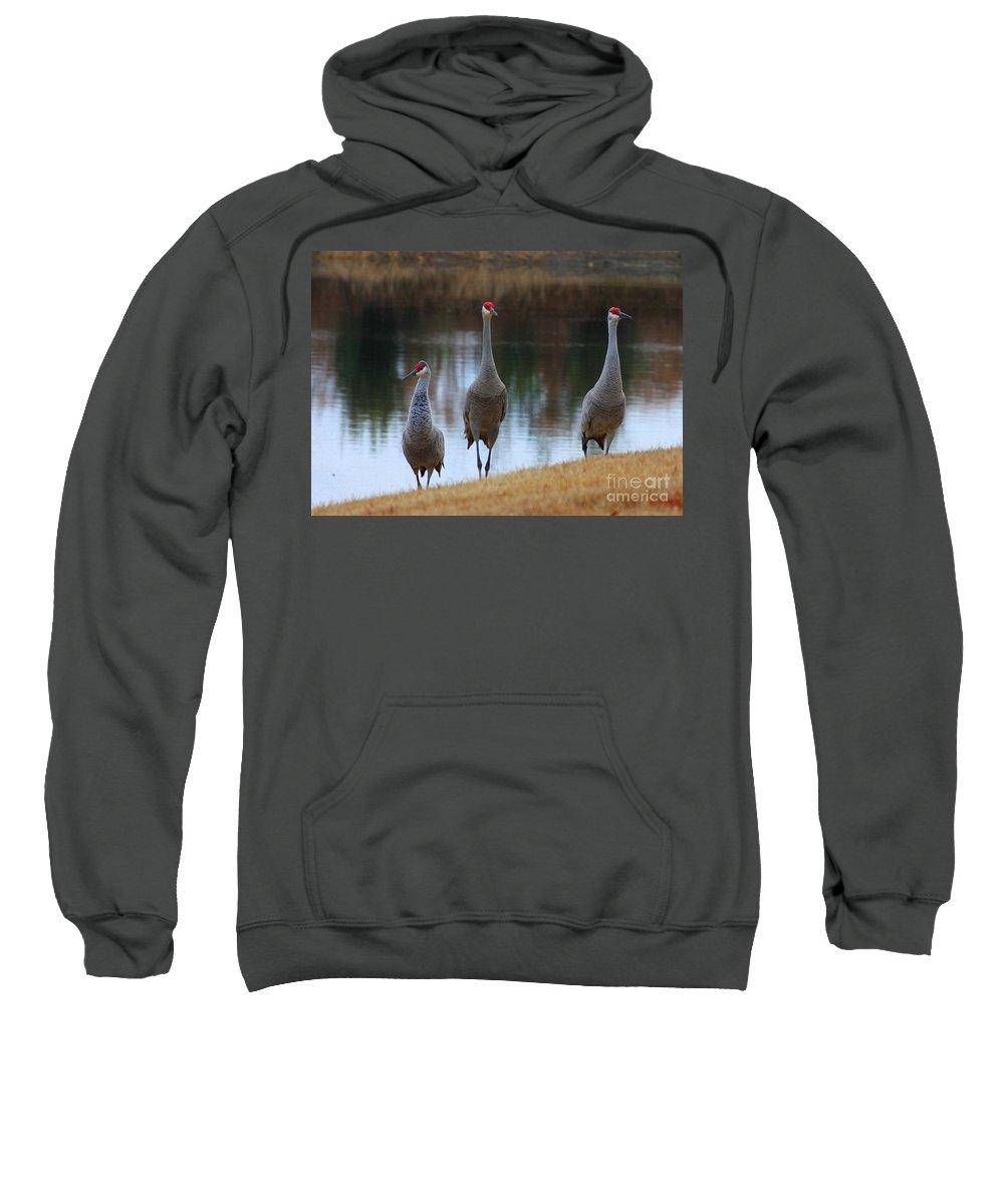 Florida Birds Sweatshirt featuring the photograph Sandhill Crane Family By Pond by Carol Groenen