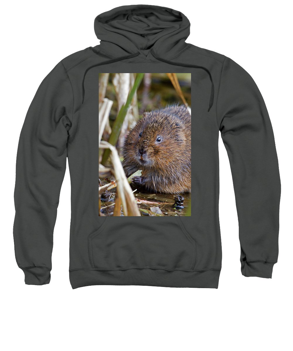 Water Vole Sweatshirt featuring the photograph Water Vole by Bob Kemp