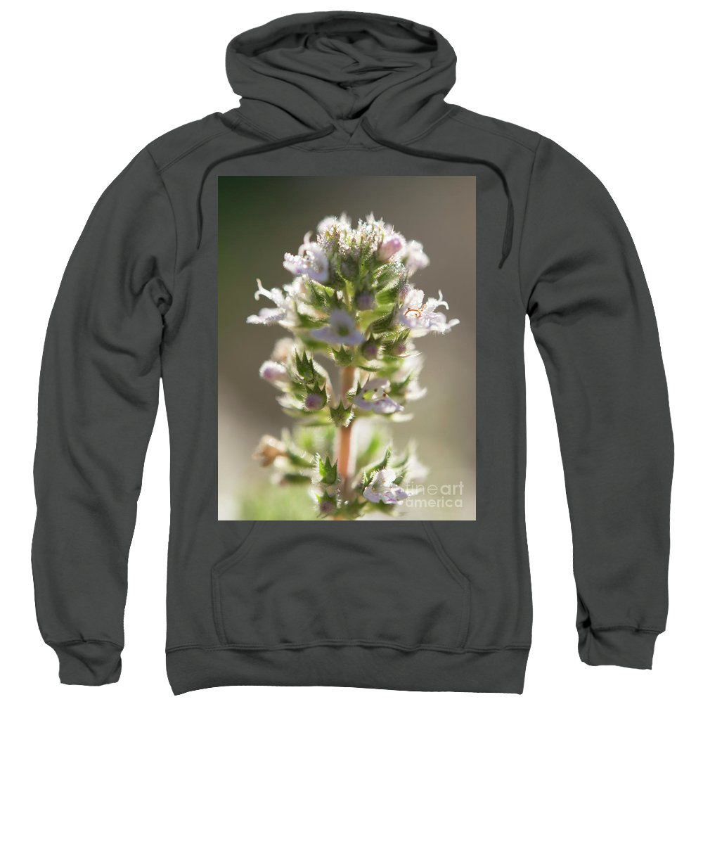 Ohio Flower Sweatshirt featuring the photograph White Flower by Michelle Himes
