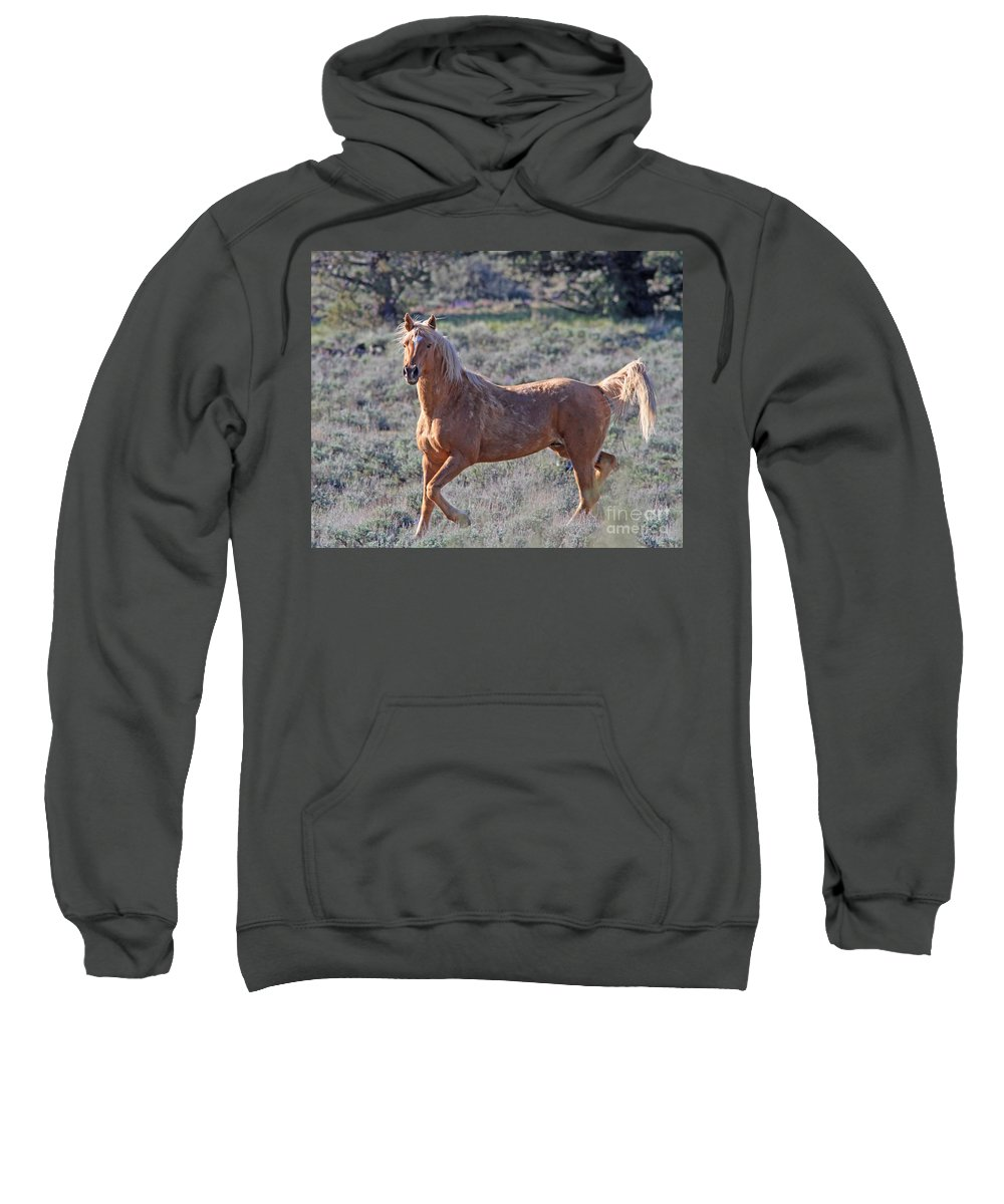 Wild Horse Sweatshirt featuring the photograph Wild Horse by Gary Wing