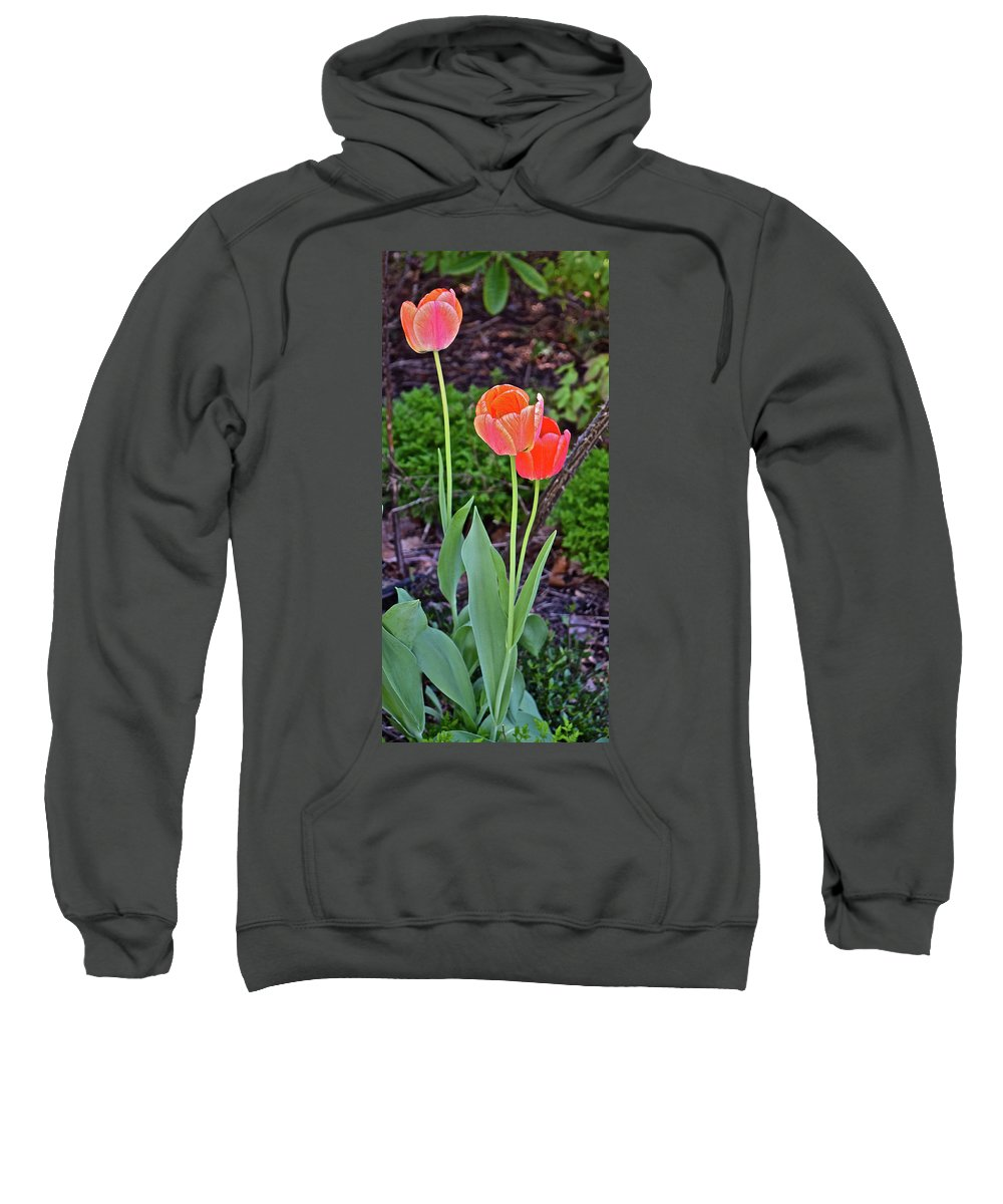 Tulips Sweatshirt featuring the photograph 2016 Early May Tall Red Tulips by Janis Nussbaum Senungetuk