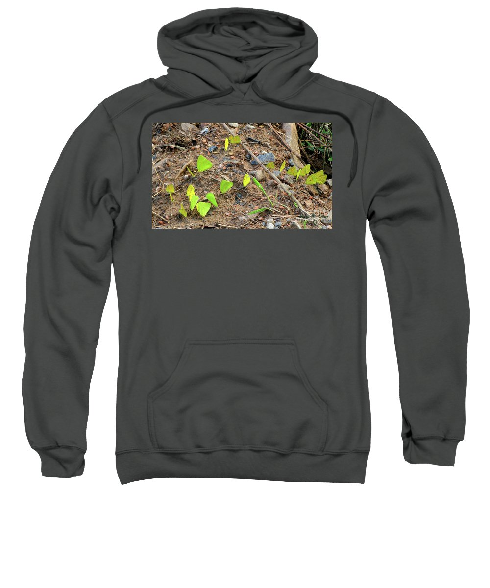 Butterflies Sweatshirt featuring the photograph 21 Yellow Butterflies by Donna Brown