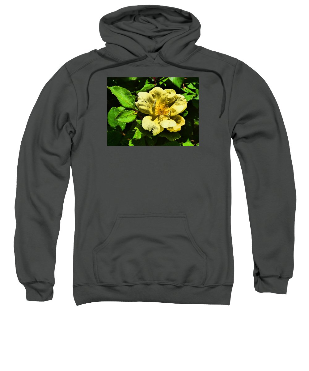 Flower Garden Idaho Photography Sweatshirt featuring the photograph The Look Of Love by Paul Stanner