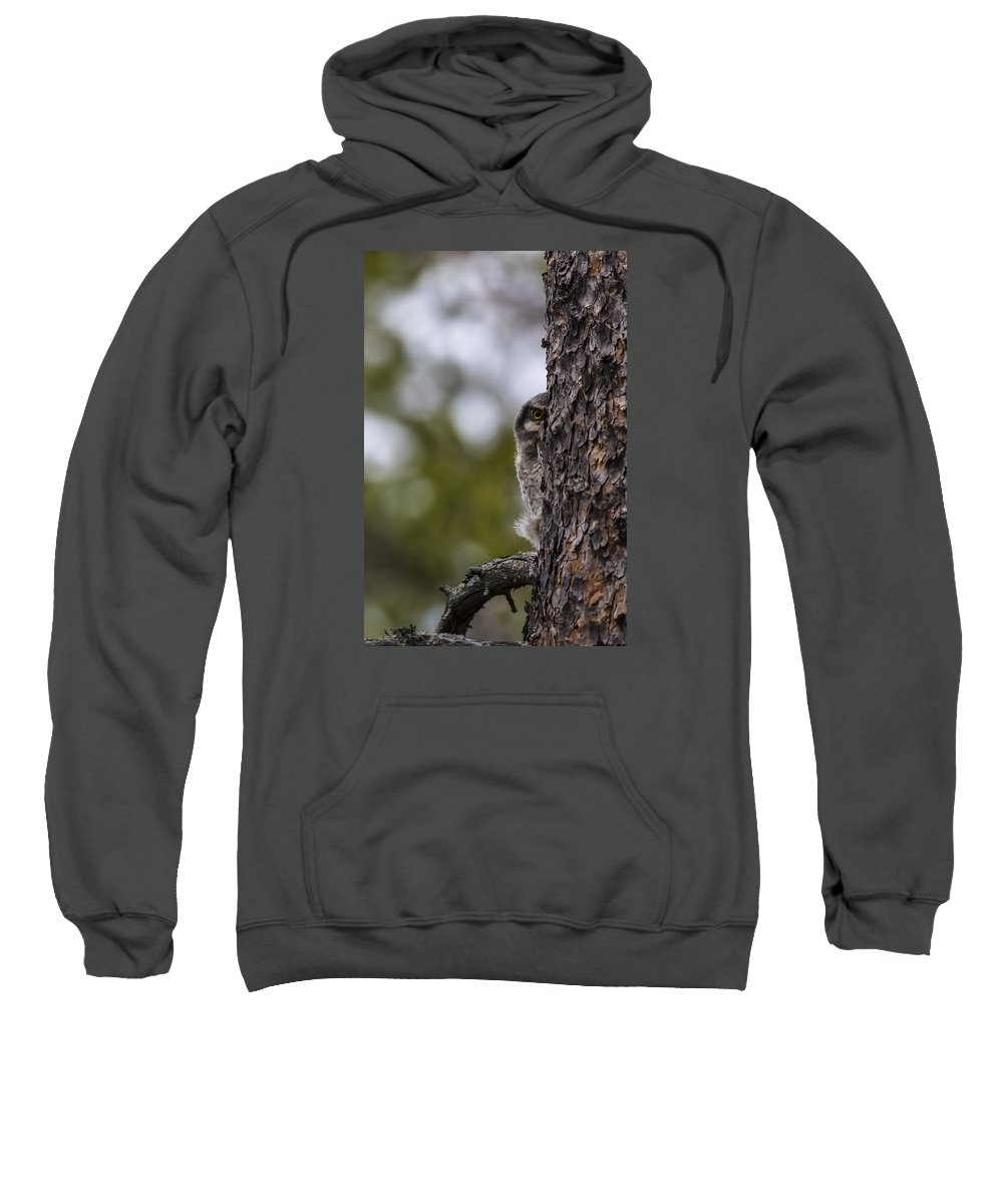 Hawk Sweatshirt featuring the photograph Hawk Owl by Borje Olsson