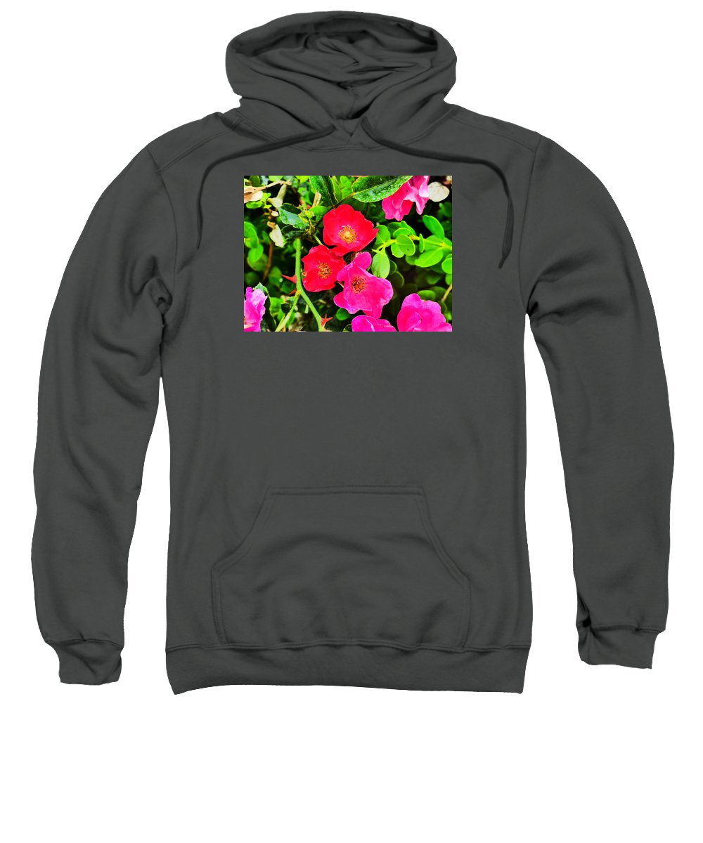 Flower Garden Idaho Photograaphy Sweatshirt featuring the photograph Velvet Nights by Paul Stanner