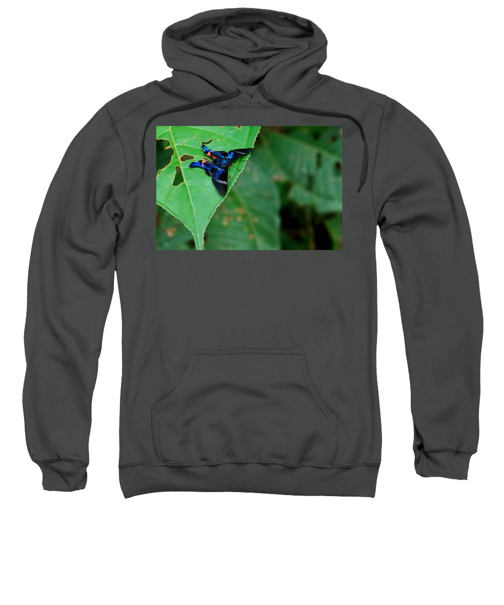 Butterfly Sweatshirt featuring the digital art Butterfly by Bert Mailer