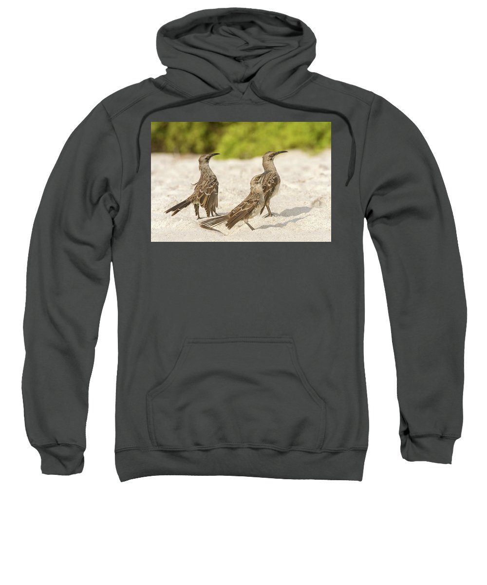 Espanola Sweatshirt featuring the photograph Galapagos Hood Mockingbird by Marek Poplawski