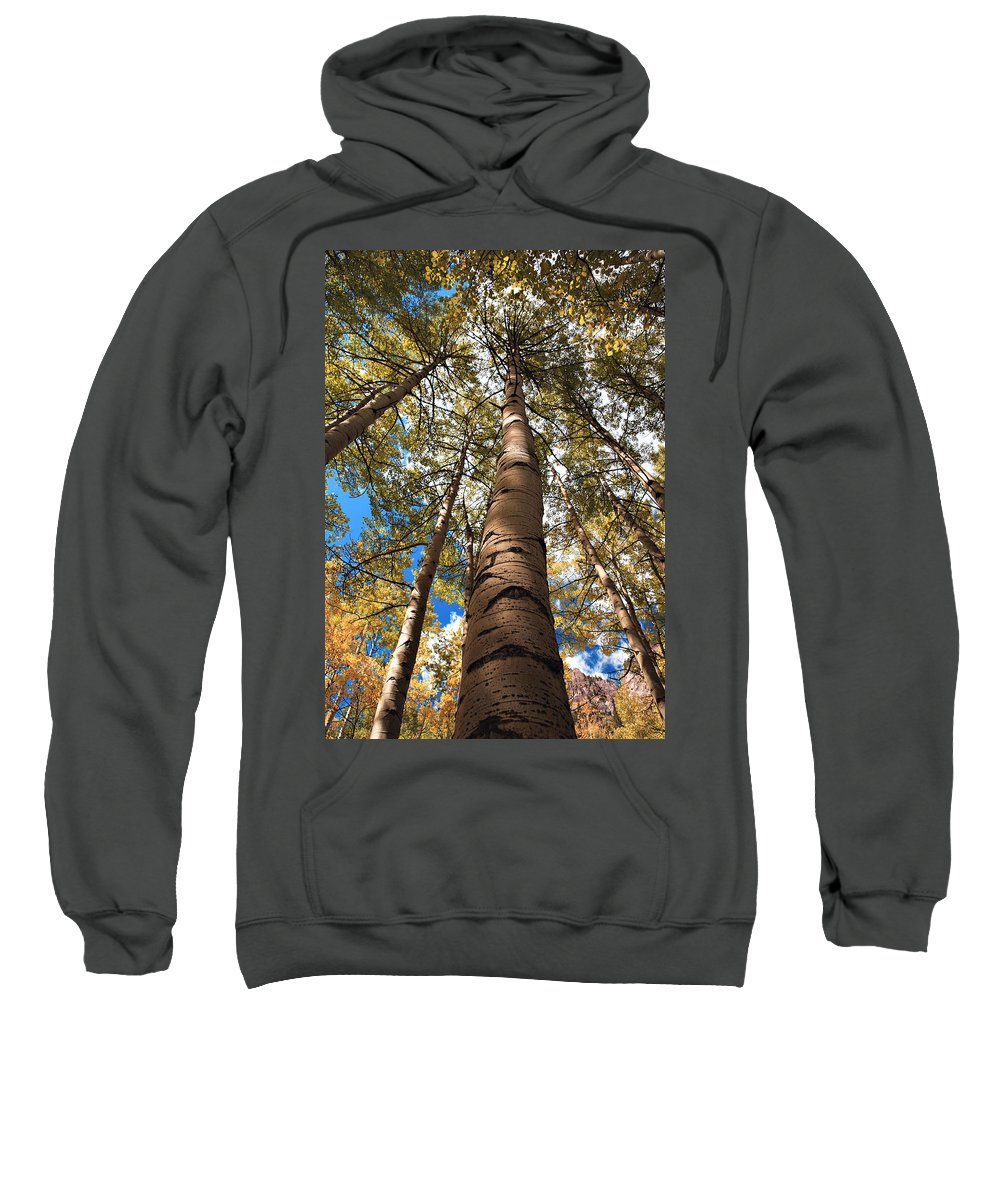 Americana Sweatshirt featuring the photograph Looking Up by Marilyn Hunt