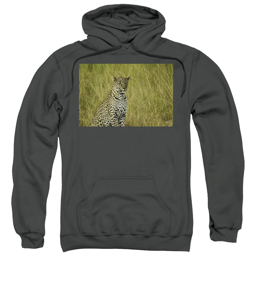 Africa Sweatshirt featuring the photograph Lovely Leopard by Michele Burgess