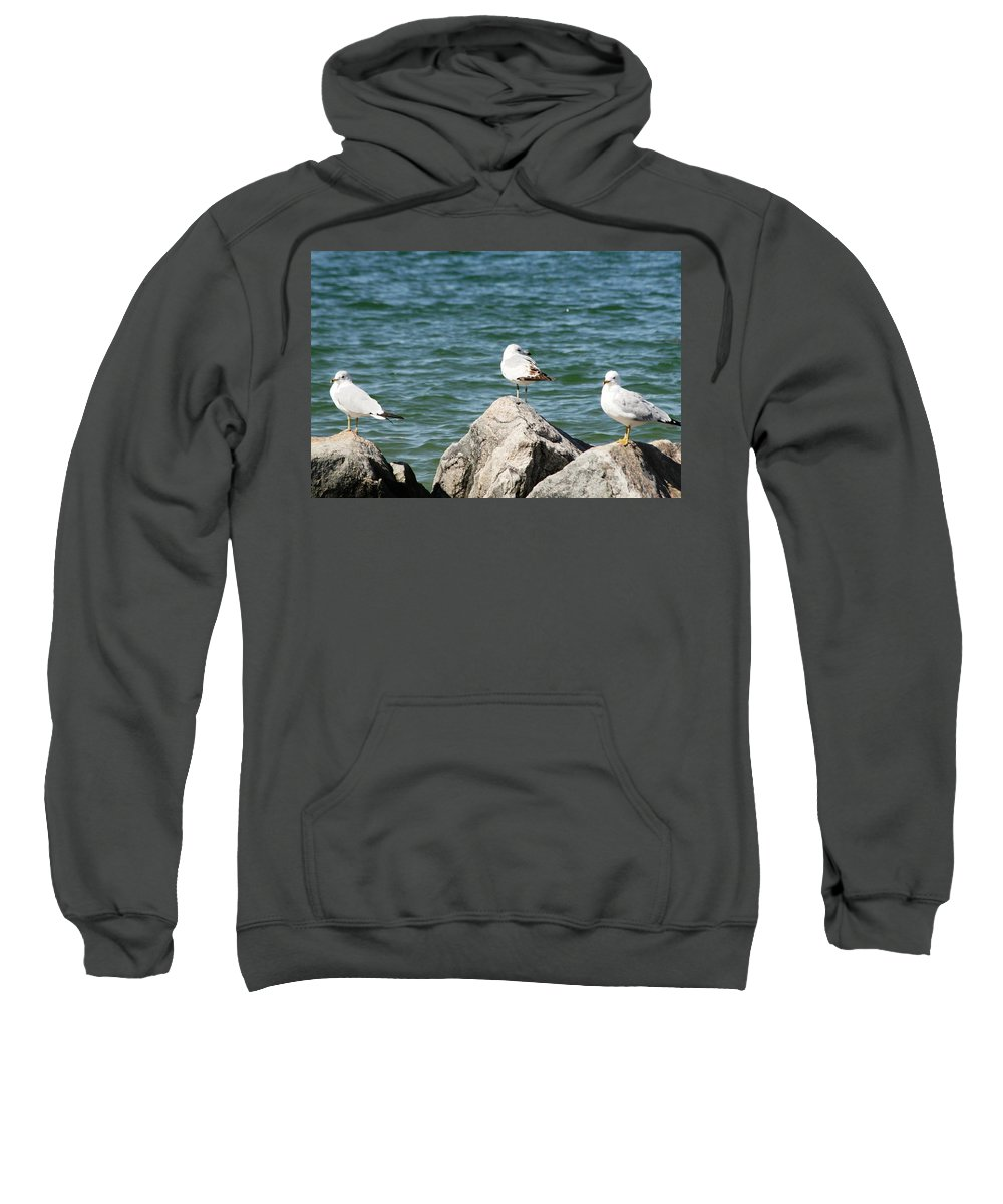 Sea Sweatshirt featuring the photograph 3 Of Them At Sea by Paul SEQUENCE Ferguson       sequence dot net