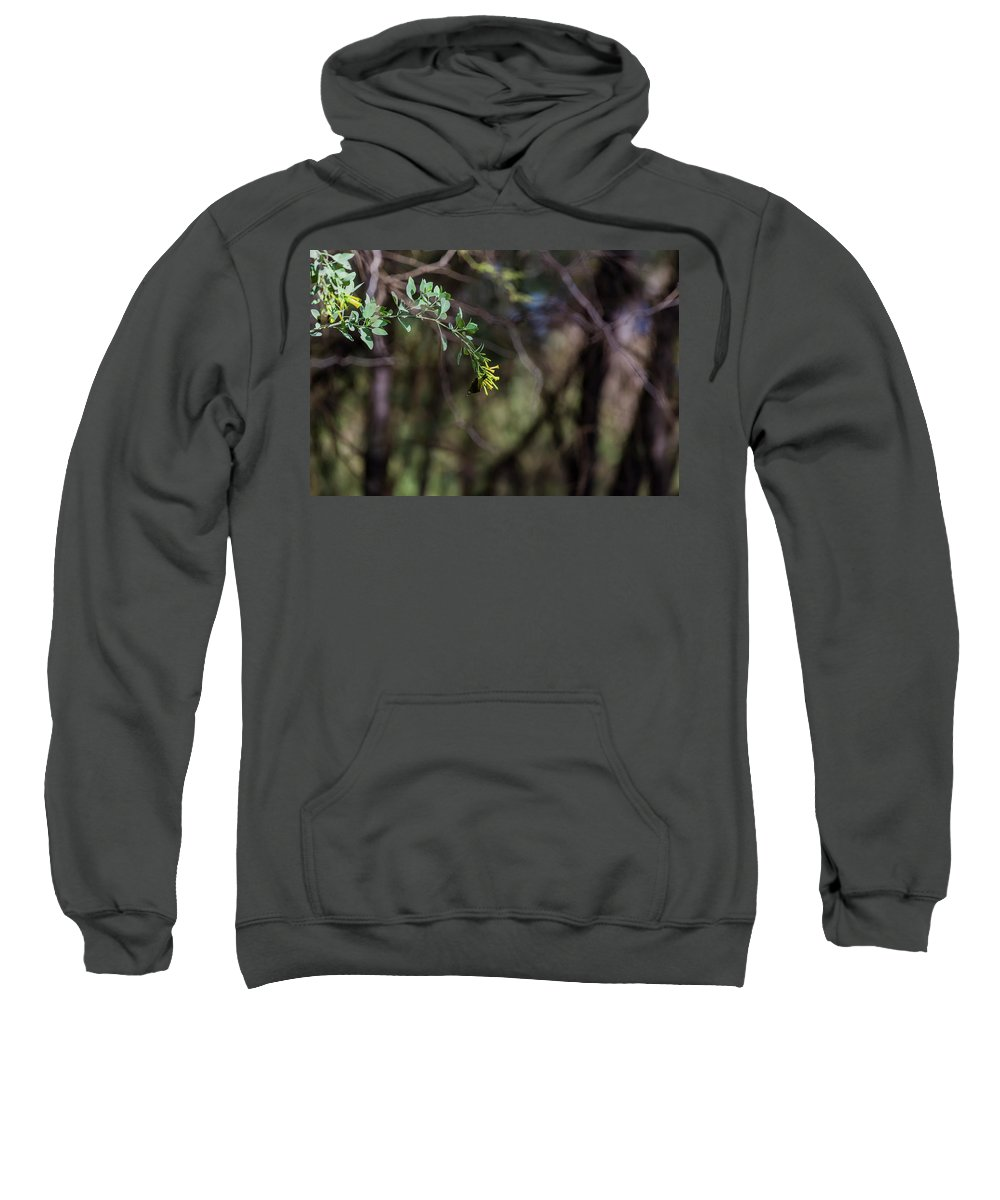 Birds Sweatshirt featuring the photograph White Ring Eyed Finch by Robert Morris