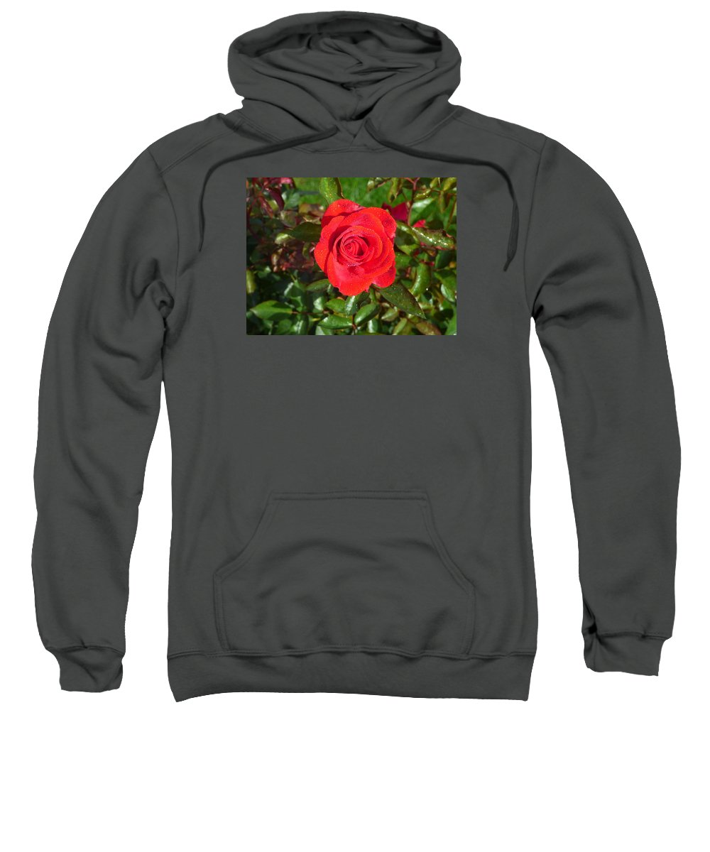 Flower Garden Idaho Photography Sweatshirt featuring the photograph La Vie En Rose by Paul Stanner