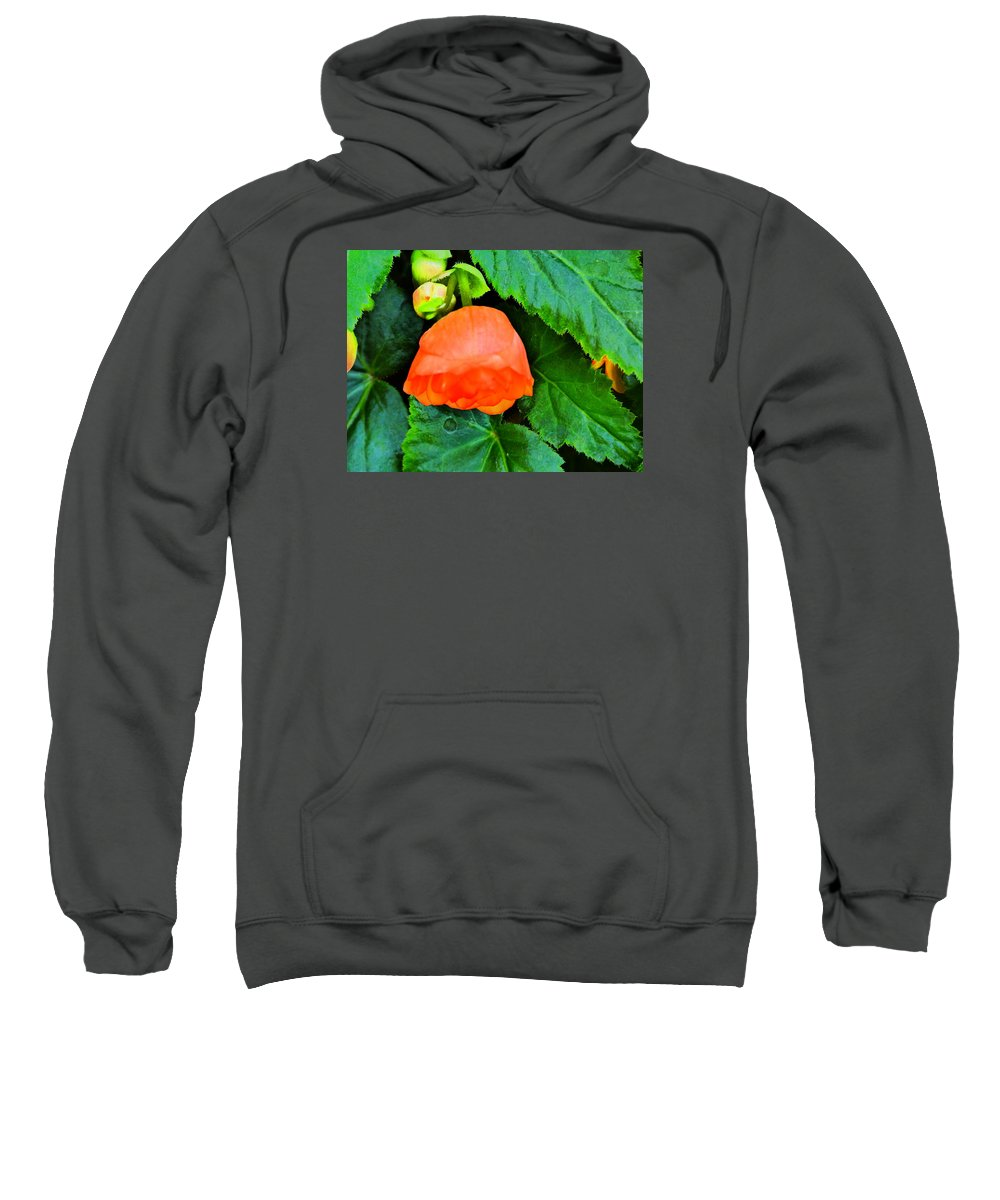 Flower Garden Idaho Photography Sweatshirt featuring the photograph Velvet Nights by Paul Stanner