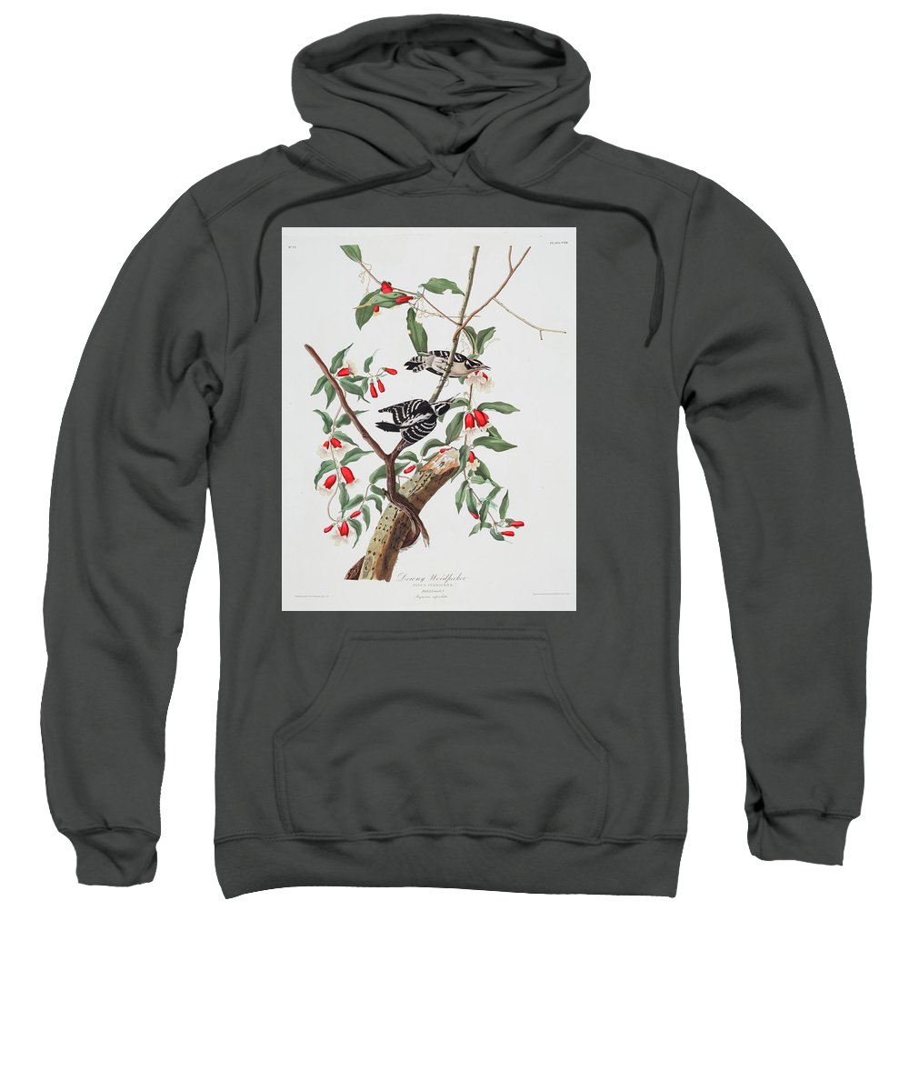 Audubon Sweatshirt featuring the drawing Downy Woodpecker by John James Audubon